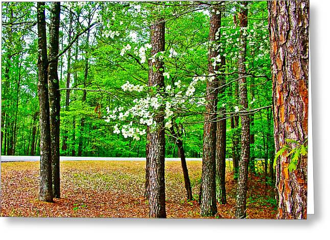 Natchez Trace Parkway Greeting Cards - Dogwood at  Mile 198 on Natchez Trace Parkway-Mississippi   Greeting Card by Ruth Hager