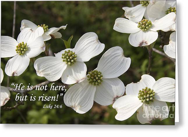 Resurrected Lord Greeting Cards - Dogwood Blooms with Scripture Greeting Card by Jill Lang