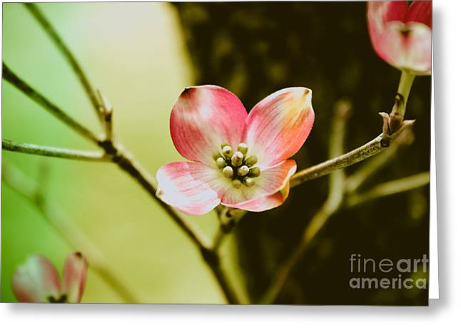 Pink Flower Branch Greeting Cards - Dogwood Blossom Greeting Card by Colleen Kammerer