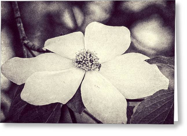 Melanie Lankford Photography Greeting Cards - Dogwood Blossom Greeting Card by Melanie Lankford Photography
