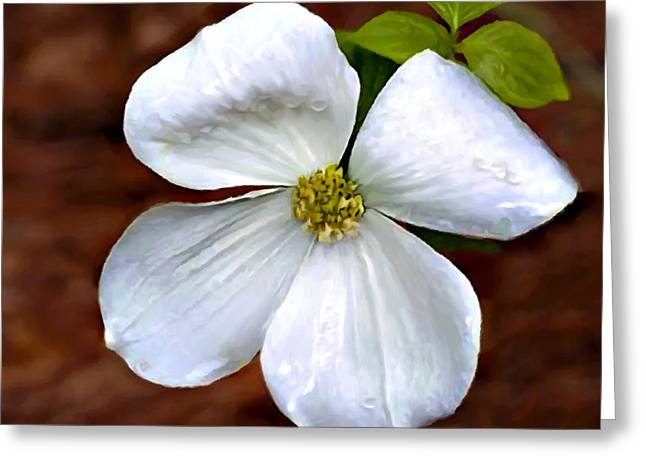 Cathedral Rock Greeting Cards - Dogwood Blossom Yosemite Greeting Card by  Bob and Nadine Johnston
