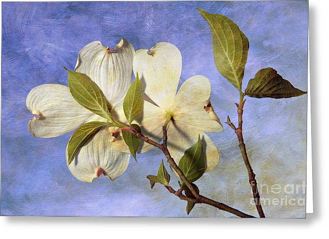 Indiana Springs Digital Art Greeting Cards - Dogwood Blossoms and Blue Sky - D007963-b Greeting Card by Daniel Dempster