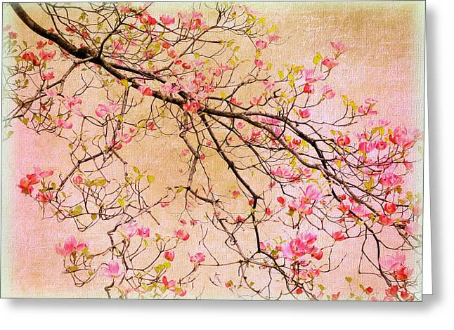 Pastel Pink Greeting Cards - Dogwood  Canvas Greeting Card by Jessica Jenney
