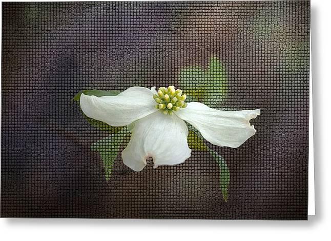 Cindy Rubin Greeting Cards - Dogwood Greeting Card by Cindy Rubin
