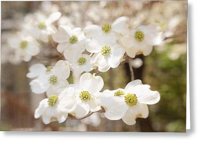 Blooming Pyrography Greeting Cards - Dogwood Greeting Card by Ilze Lucero