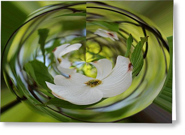 Geometric Effect Greeting Cards - Dogwood in Green Greeting Card by Judy Vincent
