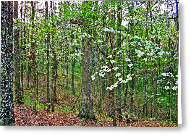 Natchez Trace Parkway Greeting Cards - Dogwood in Meriwether Lewis Campground at Mile 386 on Natchez Trace Parkway-Tennessee Greeting Card by Ruth Hager