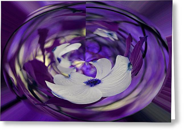 Geometric Effect Greeting Cards - Dogwood in Purple Greeting Card by Judy Vincent