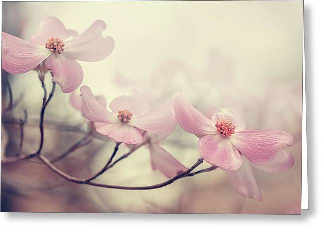 Smoky Greeting Cards - Dogwood Greeting Card by Magda  Bognar