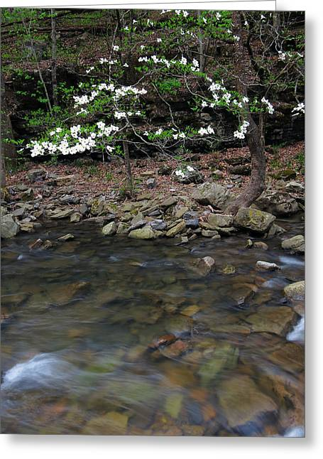 Richland Creek Greeting Cards - Dogwood on Richland Creek Greeting Card by Matthew Parks