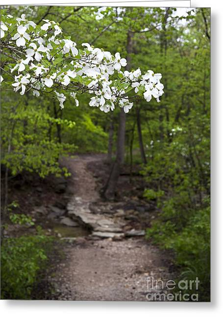 Arkansas Greeting Cards - Dogwood Tree Along a Wooded Arkansas Trail Greeting Card by Brandon Alms