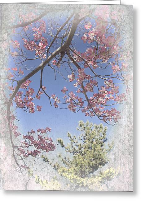 Dogwood Silhouette Greeting Cards - Dogwood Tree Blossoms Greeting Card by Dan Carmichael