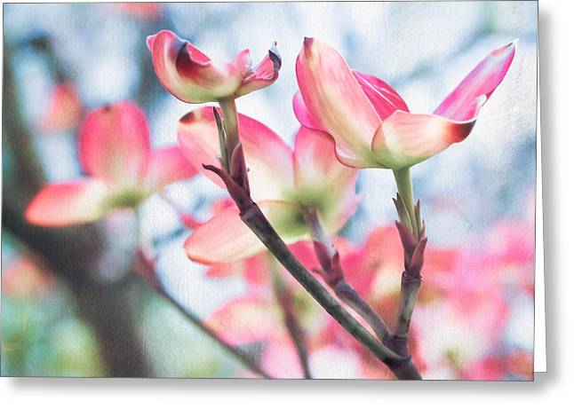 Original Art Photographs Greeting Cards - Dogwood Tree Greeting Card by Colleen Kammerer