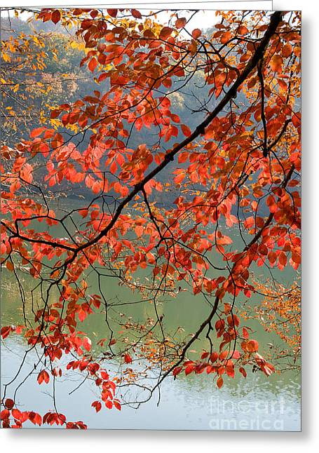 Dogwood Lake Greeting Cards - Dogwood Tree Greeting Card by Kenneth Murray