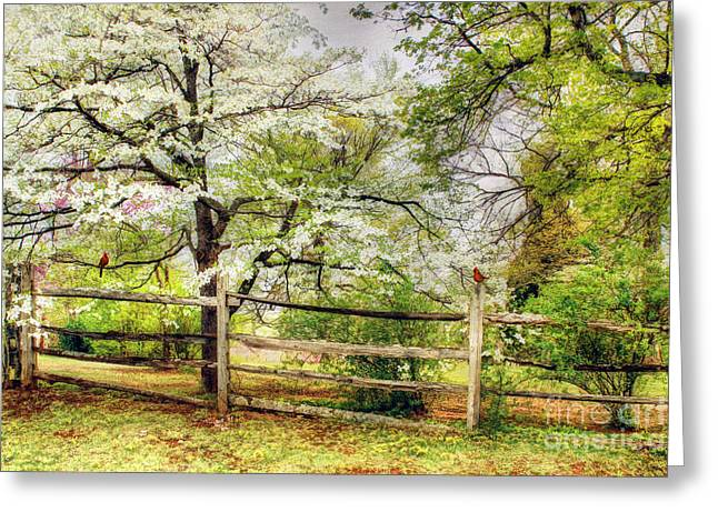 Cornus Greeting Cards - Dogwoods and Red Birds Greeting Card by Darren Fisher