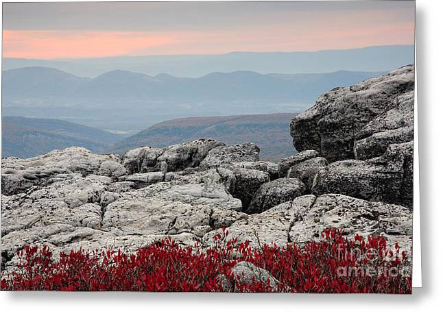 Horizontal Greeting Cards - Dolly Sods Wilderness D30007778 Greeting Card by Kevin Funk