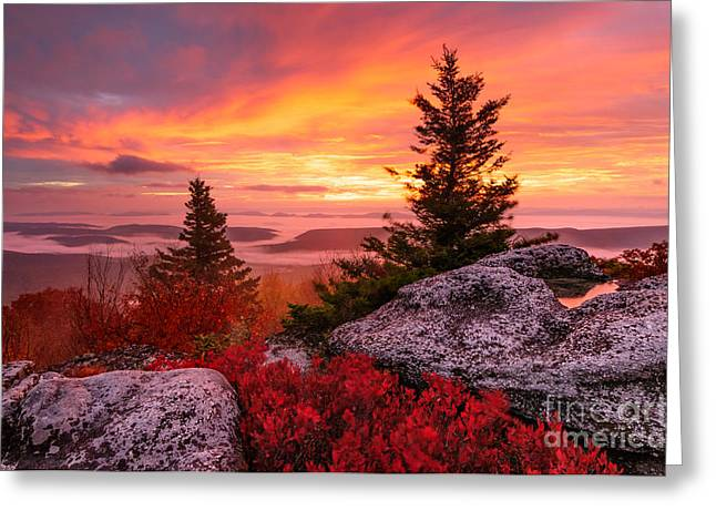 Dolly Sods Wilderness Greeting Cards - Dolly Sods Wilderness D30018216 Greeting Card by Kevin Funk