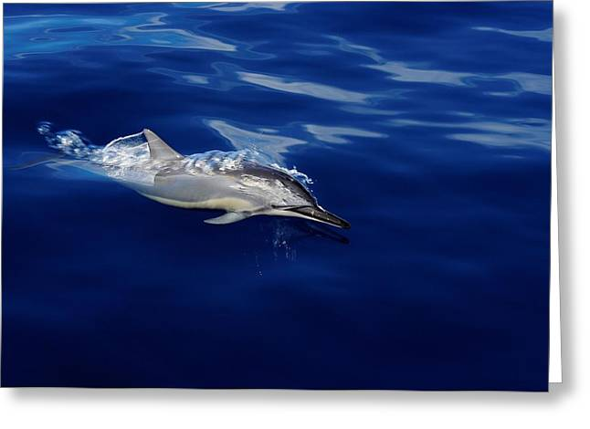 Dolphin Breaking Free Greeting Card by John  Greaves