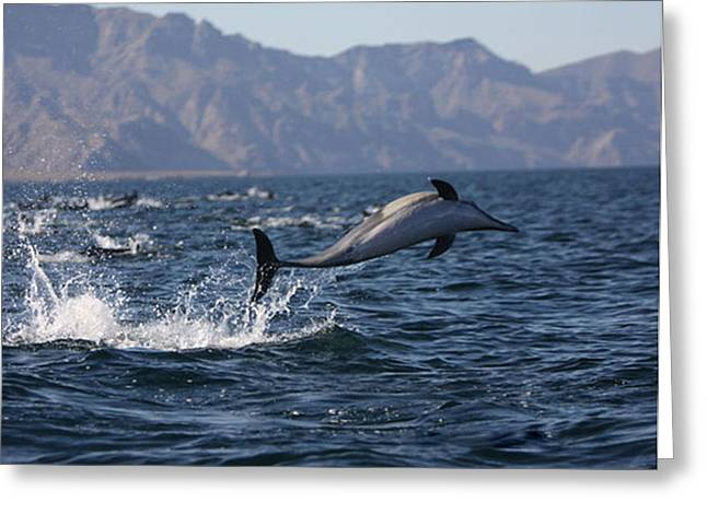 California Ocean Photography Greeting Cards - Dolphin Dance Greeting Card by Kandy Hurley