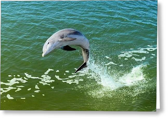 Aquatic Greeting Cards - Dolphin  Greeting Card by Elaine Manley