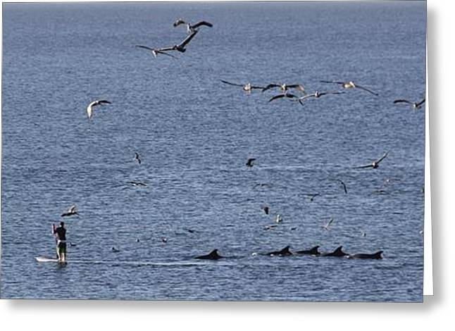 Hovering Greeting Cards - Dolphin Family Greeting Card by Jan Cipolla