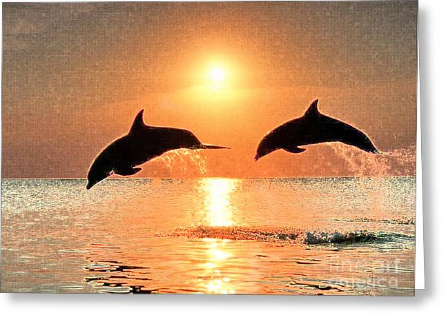 Dolphin Golden Sunset Greeting Card by Cadence Spalding