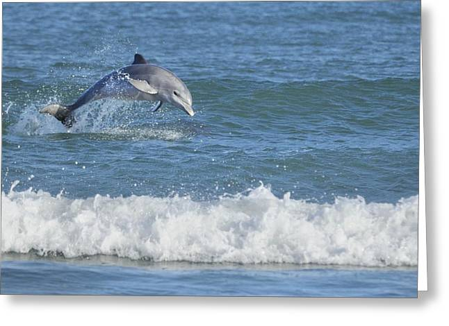 Dolphin In Surf Greeting Card by Bradford Martin