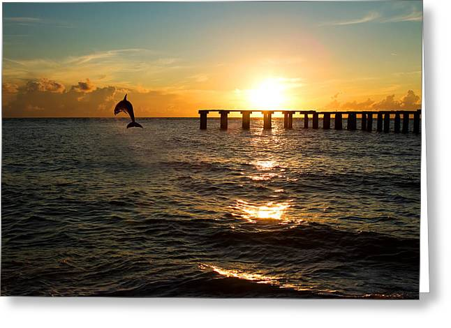 Toy Boat Greeting Cards - Dolphin Jumping Out Of The Sea In Florida Greeting Card by Fizzy Image