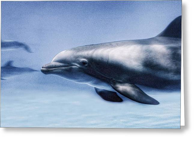 Cetaceans Greeting Cards - Dolphin  Greeting Card by Marianna Mills