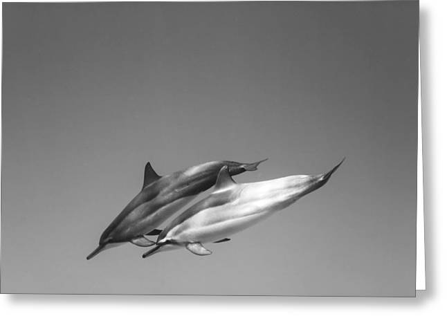 Sea Life Framed Prints Greeting Cards - Dolphin pair Greeting Card by Sean Davey