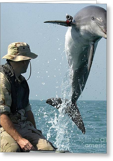 To Measure Forces Greeting Cards - Dolphin Greeting Card by Paul Fearn