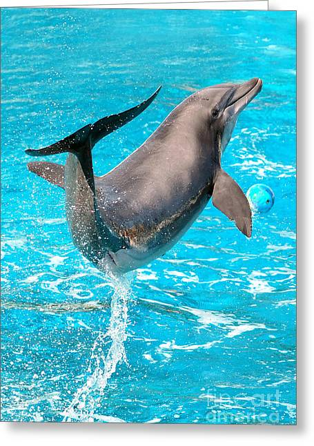 Dolphin Plays Greeting Card by Michal Bednarek