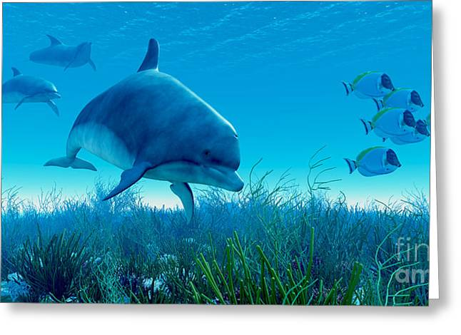 Sea Creature Pictures Greeting Cards - Dolphin Pod Greeting Card by Corey Ford