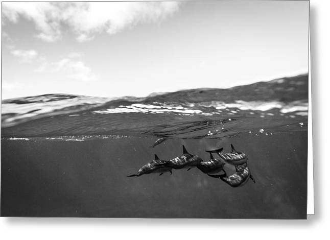 Surfing And Dolphins Greeting Cards - Dolphin Pod  Greeting Card by Doug Falter