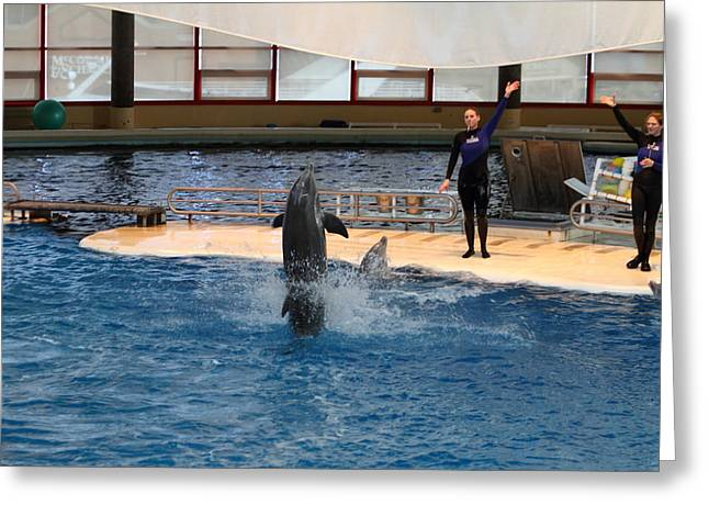 Aquatic Greeting Cards - Dolphin Show - National Aquarium in Baltimore MD - 1212101 Greeting Card by DC Photographer