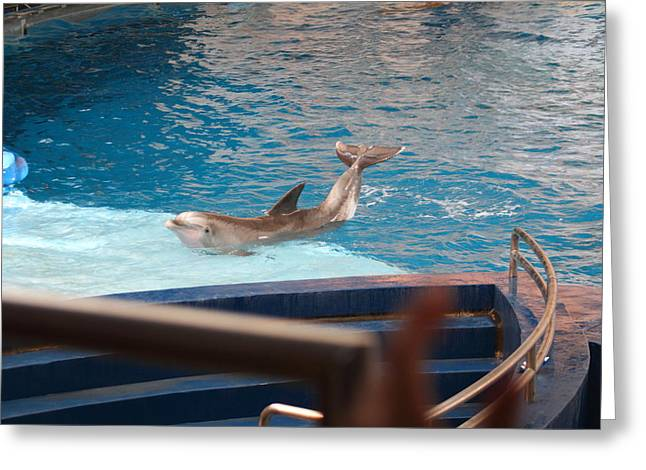 Show Greeting Cards - Dolphin Show - National Aquarium in Baltimore MD - 1212104 Greeting Card by DC Photographer