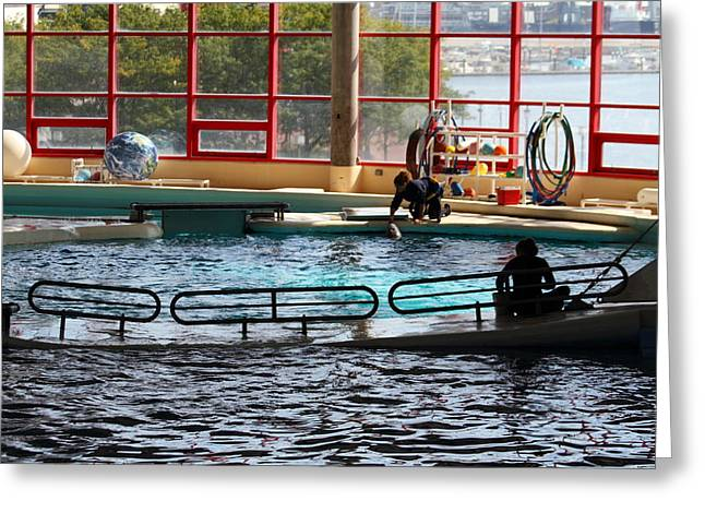 Aquatic Greeting Cards - Dolphin Show - National Aquarium in Baltimore MD - 1212107 Greeting Card by DC Photographer
