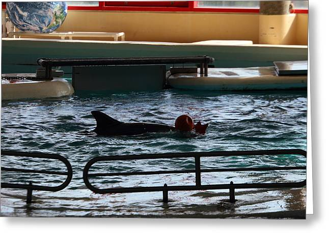 Dolphin Show - National Aquarium In Baltimore Md - 1212111 Greeting Card by DC Photographer