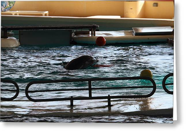 Aquatic Greeting Cards - Dolphin Show - National Aquarium in Baltimore MD - 1212112 Greeting Card by DC Photographer