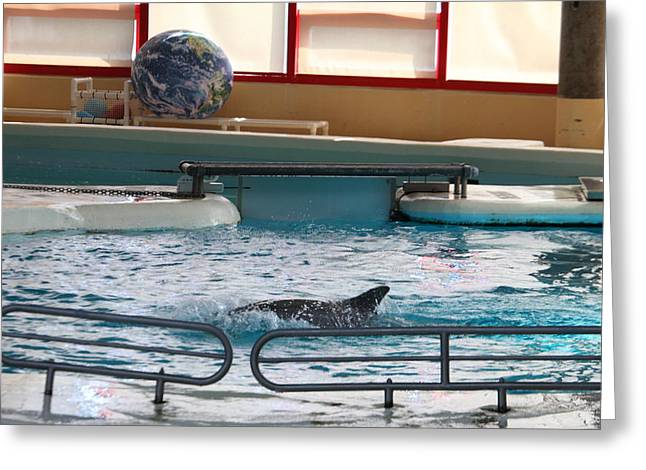 Attraction Greeting Cards - Dolphin Show - National Aquarium in Baltimore MD - 1212114 Greeting Card by DC Photographer