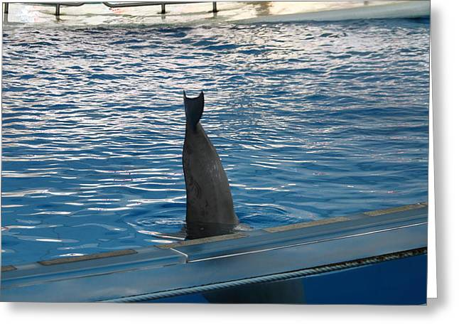 Nationals Greeting Cards - Dolphin Show - National Aquarium in Baltimore MD - 1212127 Greeting Card by DC Photographer
