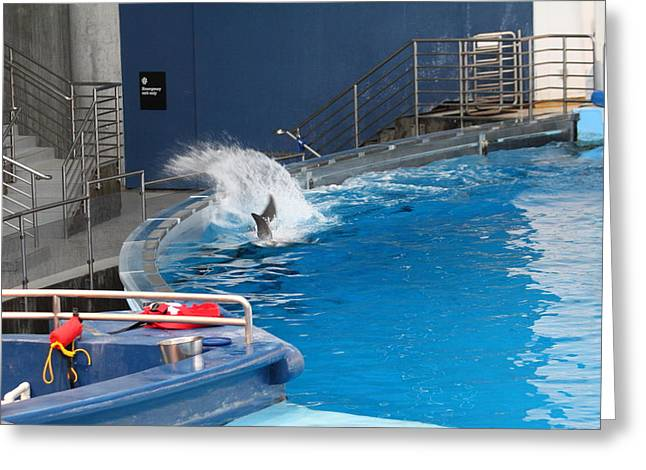 Aquatic Greeting Cards - Dolphin Show - National Aquarium in Baltimore MD - 1212131 Greeting Card by DC Photographer