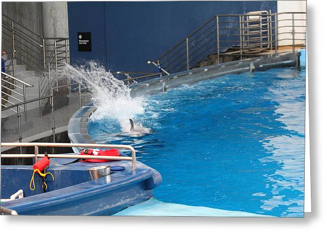 Fish Greeting Cards - Dolphin Show - National Aquarium in Baltimore MD - 1212132 Greeting Card by DC Photographer