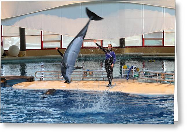 Tourist Greeting Cards - Dolphin Show - National Aquarium in Baltimore MD - 1212136 Greeting Card by DC Photographer