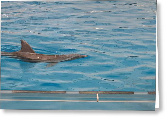 Sealife Greeting Cards - Dolphin Show - National Aquarium in Baltimore MD - 121214 Greeting Card by DC Photographer