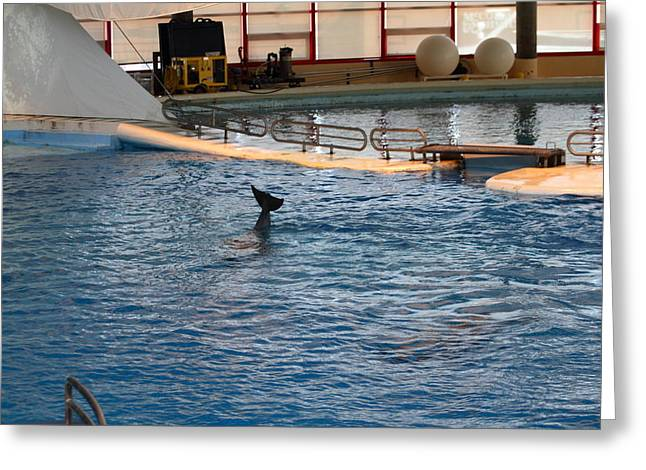 Dolphin Show - National Aquarium in Baltimore MD - 1212142 Greeting Card by DC Photographer