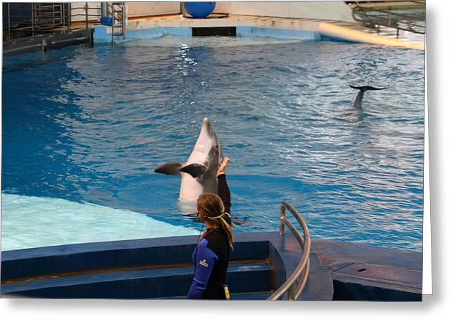 Dolphin Greeting Cards - Dolphin Show - National Aquarium in Baltimore MD - 1212144 Greeting Card by DC Photographer