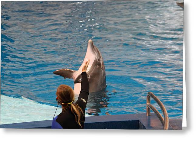 Show Greeting Cards - Dolphin Show - National Aquarium in Baltimore MD - 1212149 Greeting Card by DC Photographer