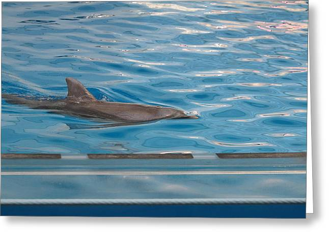 History Photographs Greeting Cards - Dolphin Show - National Aquarium in Baltimore MD - 121215 Greeting Card by DC Photographer