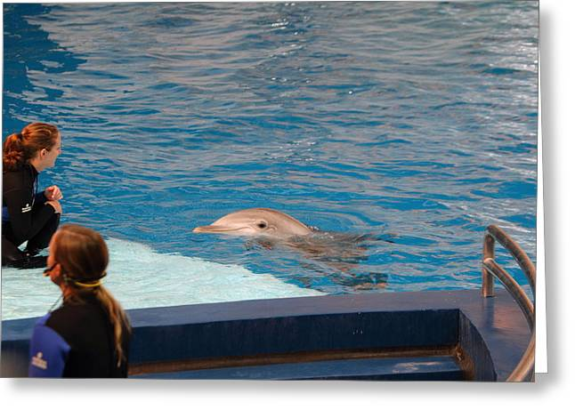 Aquarium Greeting Cards - Dolphin Show - National Aquarium in Baltimore MD - 1212152 Greeting Card by DC Photographer